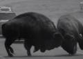 John Hillcoat (The Road, Lawless) dirige il video di She Used to Love Me a Lot, inedito di Johnny Cash