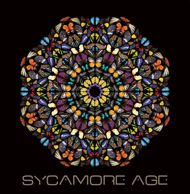 sycamore-Age